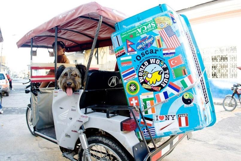 As belas aventuras de Oscar, o cão viajante 23