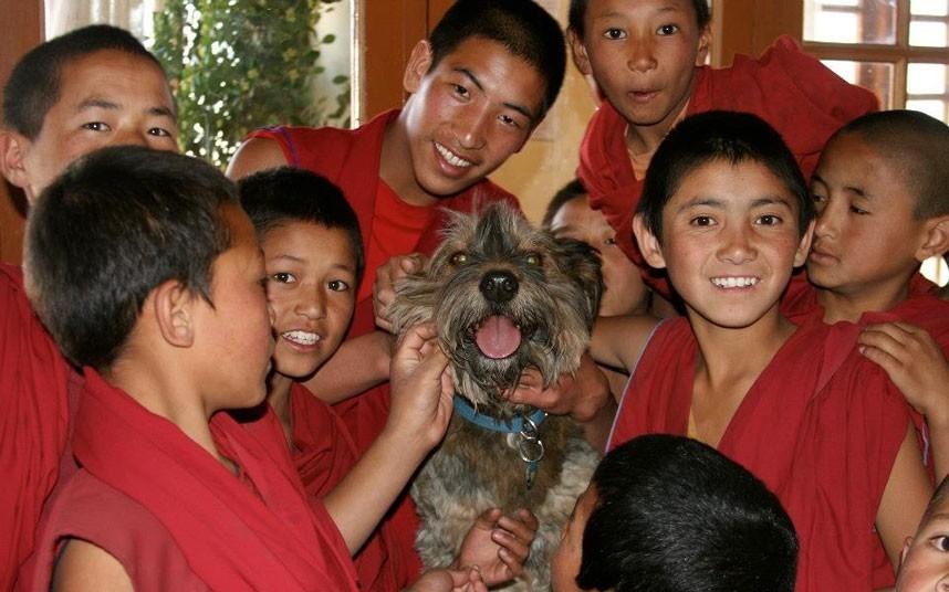 As belas aventuras de Oscar, o cão viajante 25