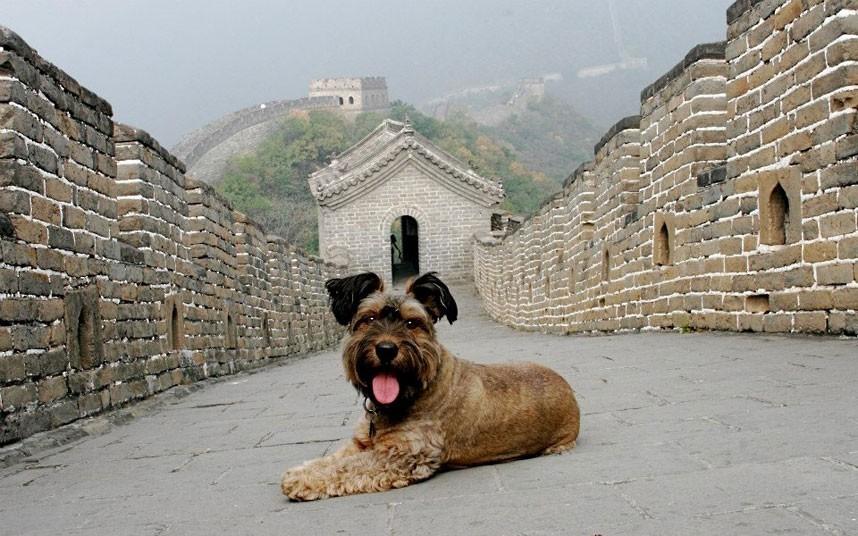 As belas aventuras de Oscar, o cão viajante 26