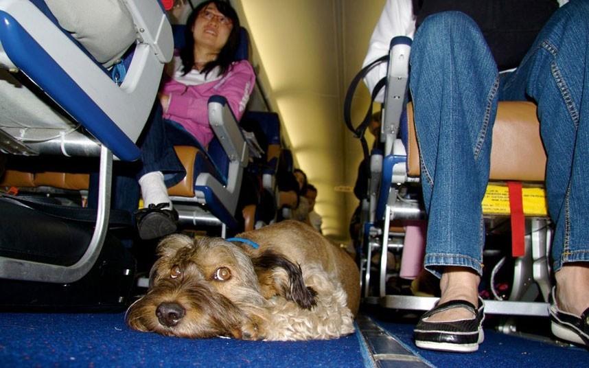 As belas aventuras de Oscar, o cão viajante 27