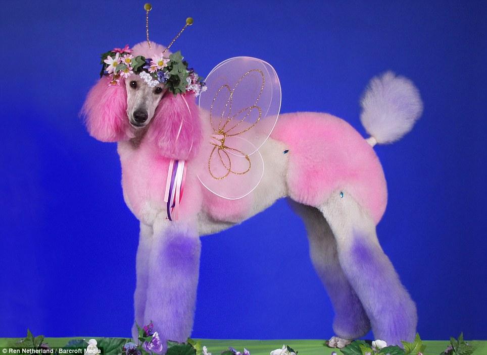 Penteados caninos bizarros 10