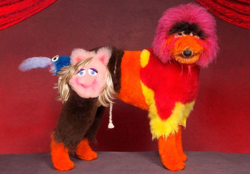 Penteados caninos bizarros 12