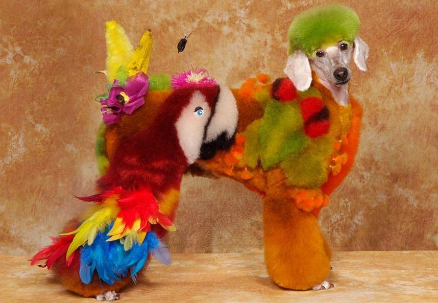 Penteados caninos bizarros 15