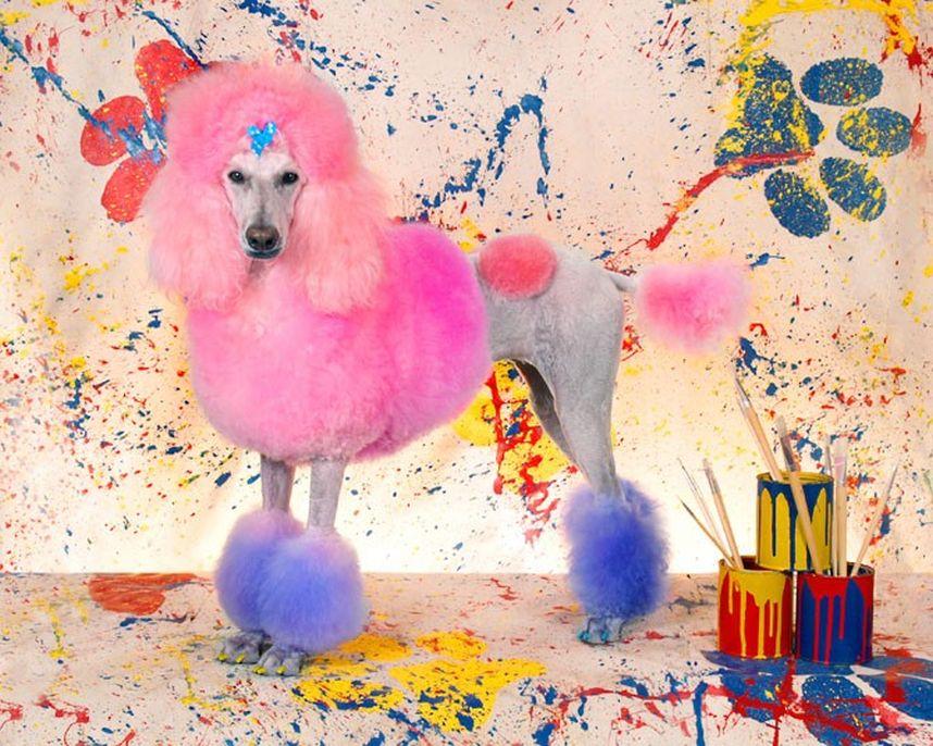 Penteados caninos bizarros 21