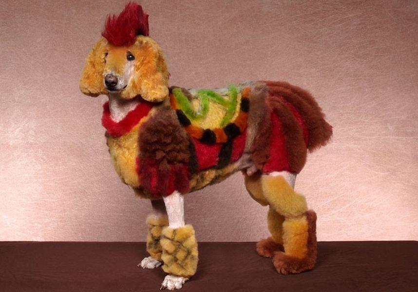 Penteados caninos bizarros 22