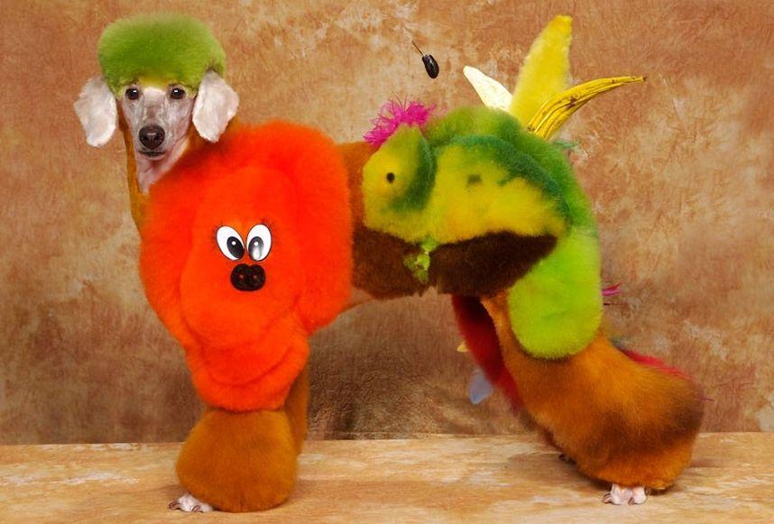 Penteados caninos bizarros 24
