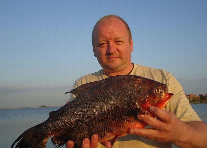 Uma piranha em um lago russo 02