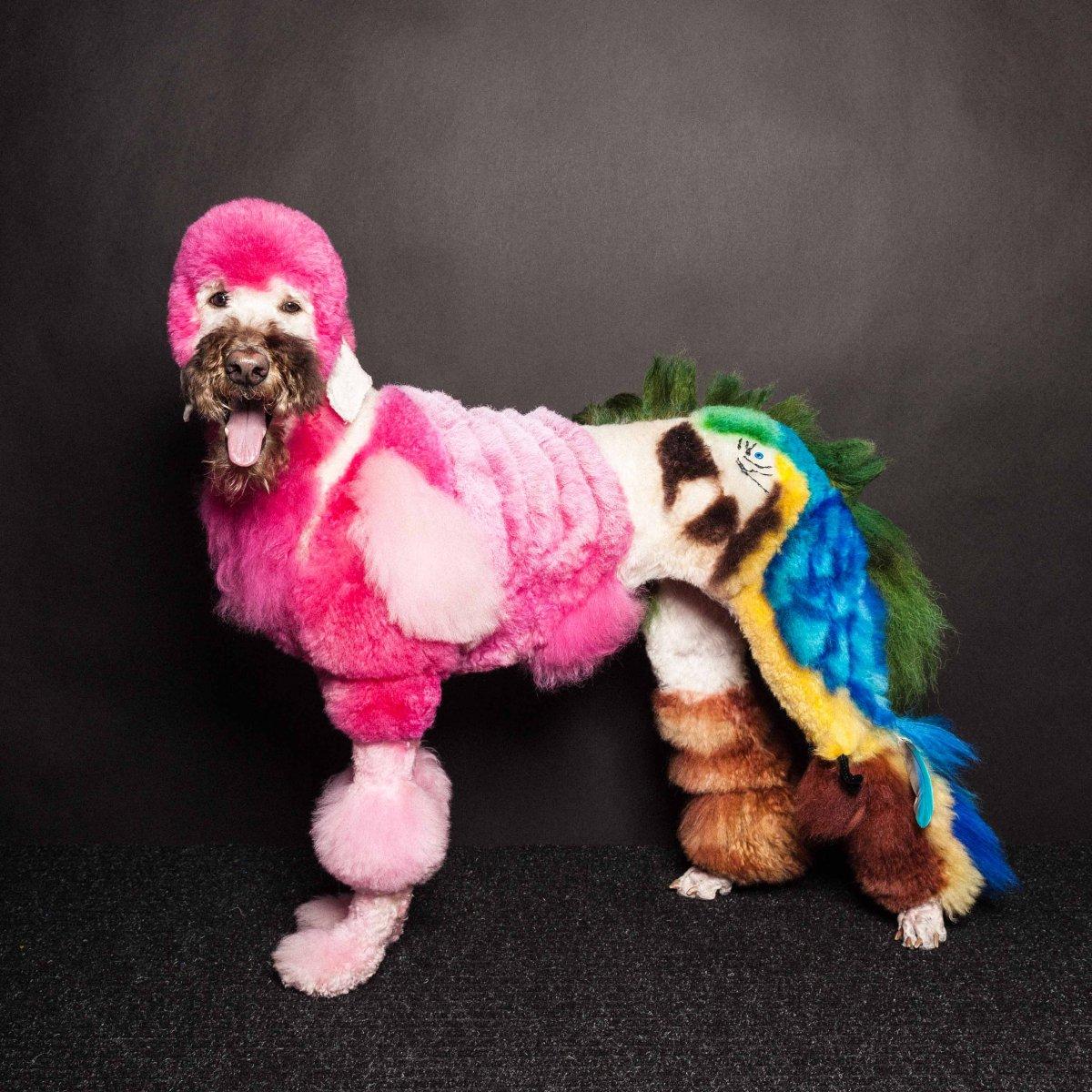 Concurso de moda canina mostra porque os cães mordem gente 01