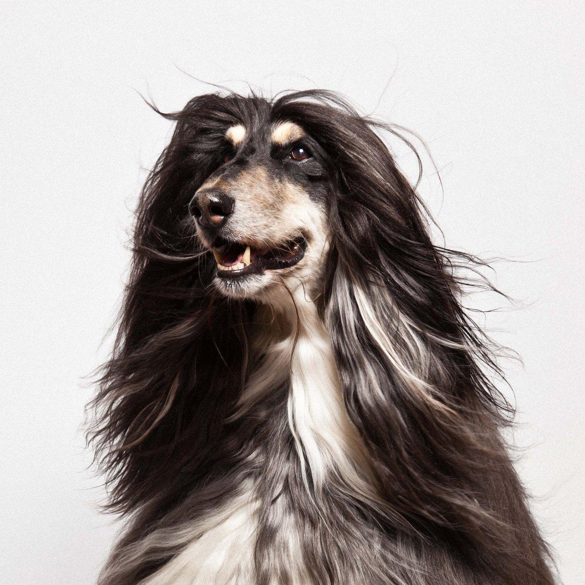 Concurso de moda canina mostra porque os cães mordem gente 02
