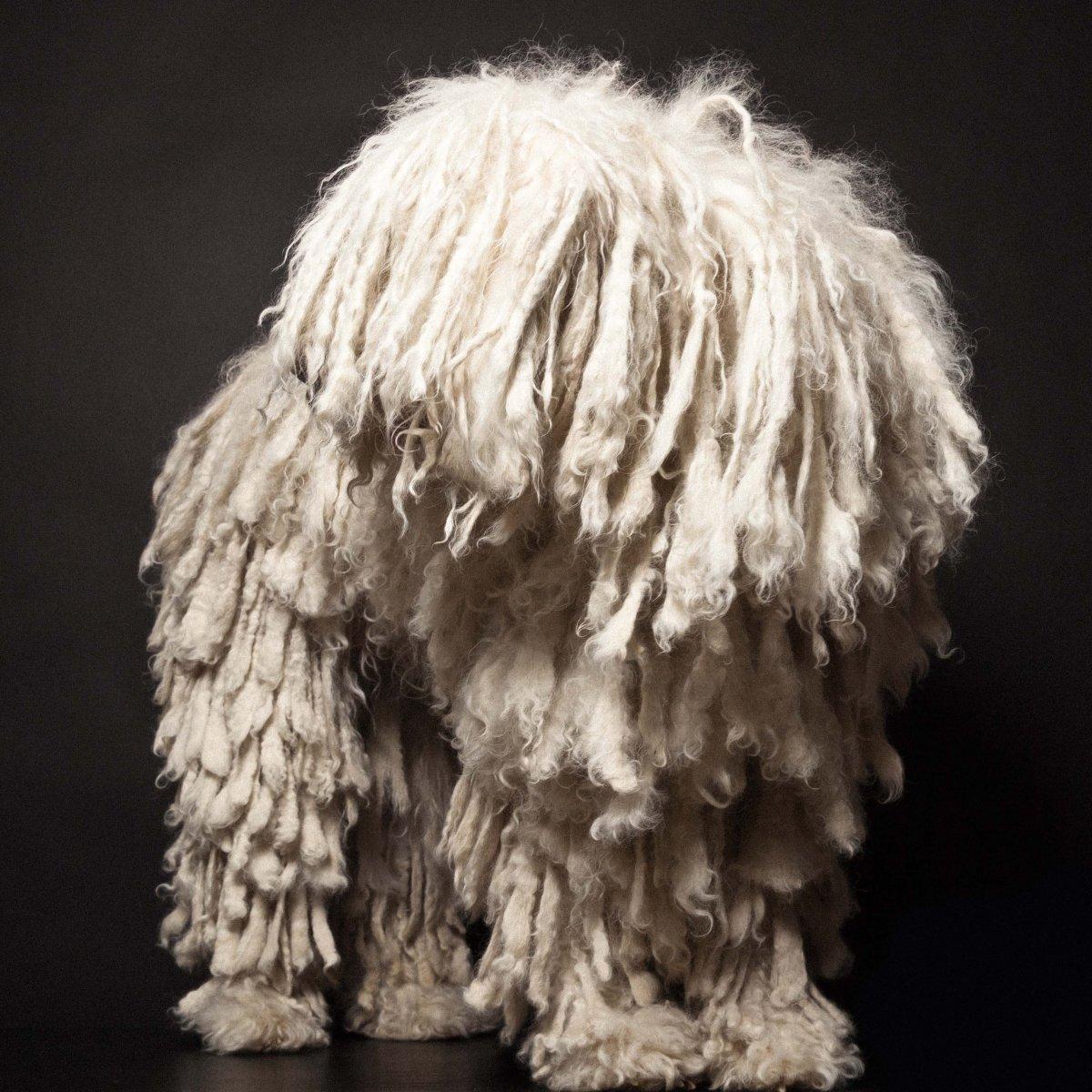 Concurso de moda canina mostra porque os cães mordem gente 04