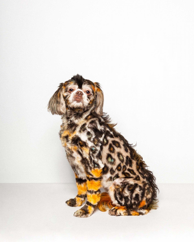 Concurso de moda canina mostra porque os cães mordem gente 06