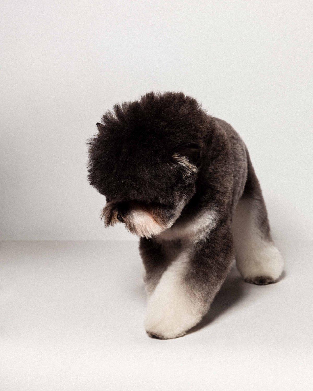 Concurso de moda canina mostra porque os cães mordem gente 07