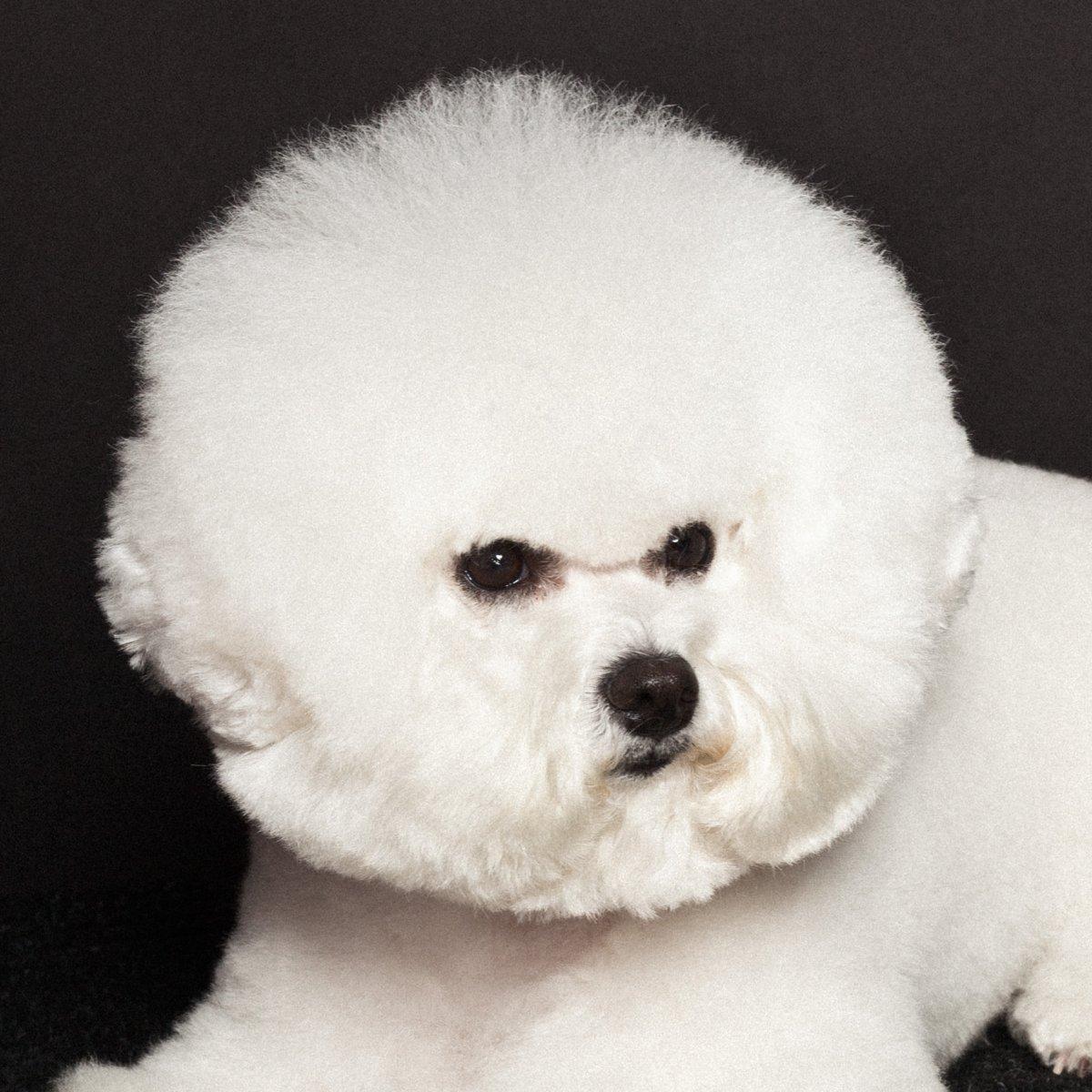 Concurso de moda canina mostra porque os cães mordem gente 08