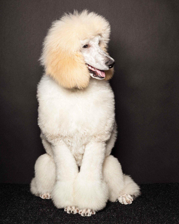 Concurso de moda canina mostra porque os cães mordem gente 09