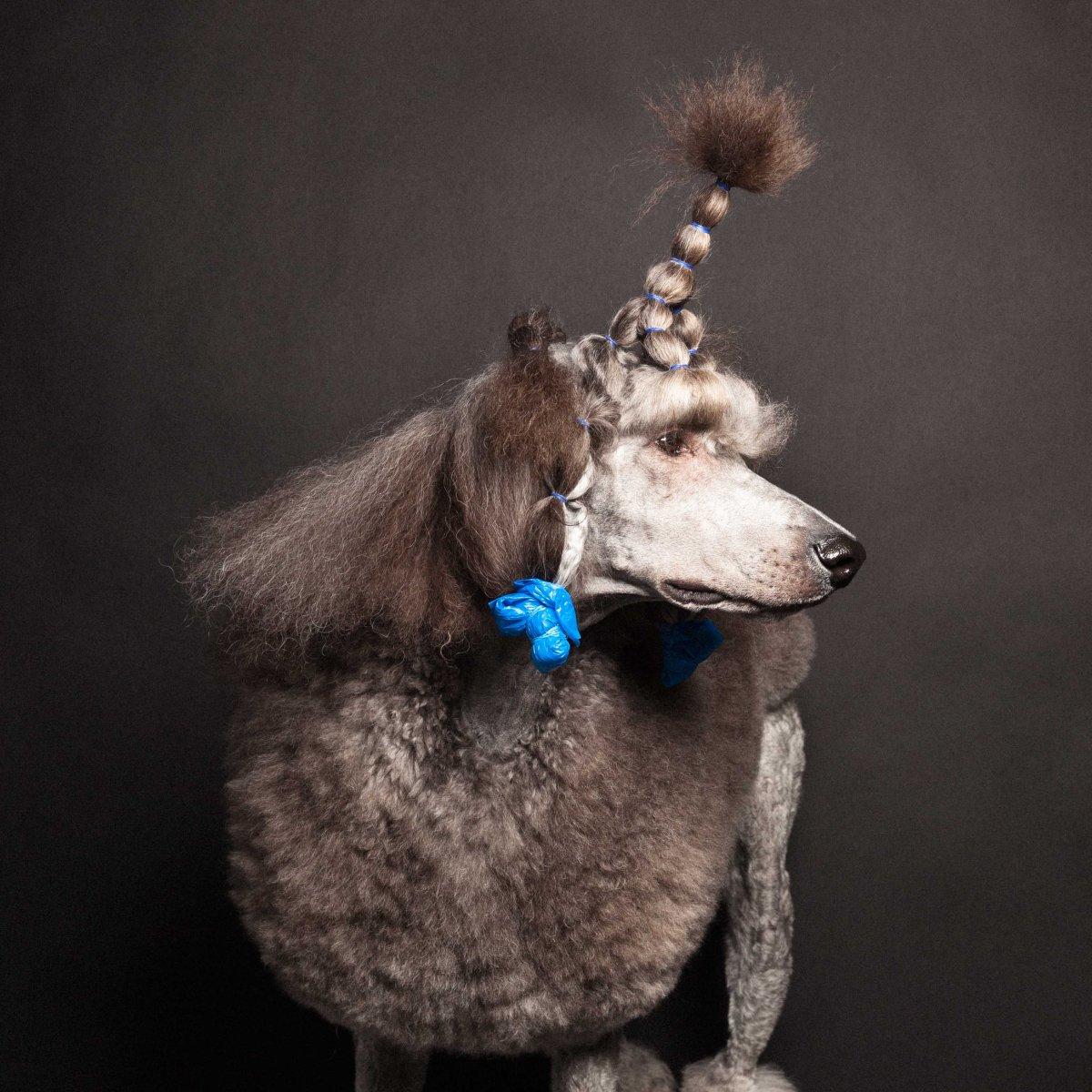 Concurso de moda canina mostra porque os cães mordem gente 10