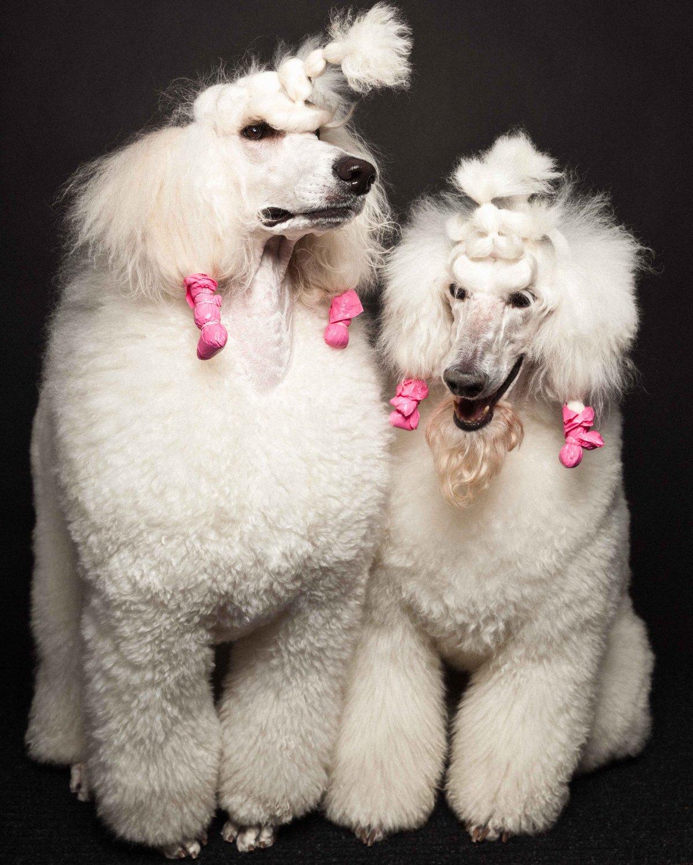 Concurso de moda canina mostra porque os cães mordem gente 11