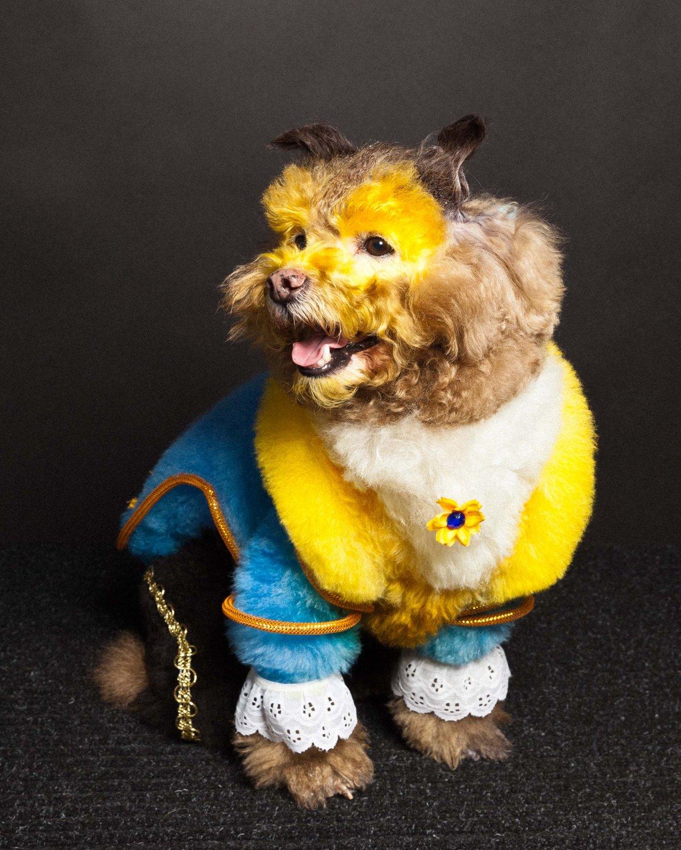 Concurso de moda canina mostra porque os cães mordem gente 12