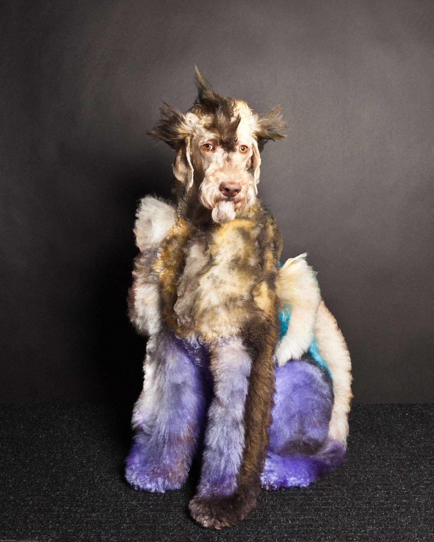 Concurso de moda canina mostra porque os cães mordem gente 13