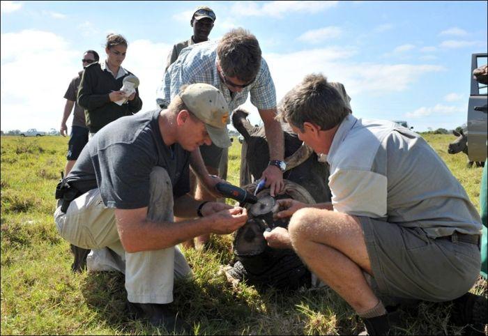 Salvando rinocerontes 02