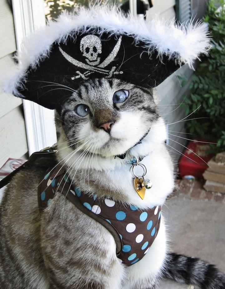 A história do pitbull Patrick e Spangles, o gato vesgo 01