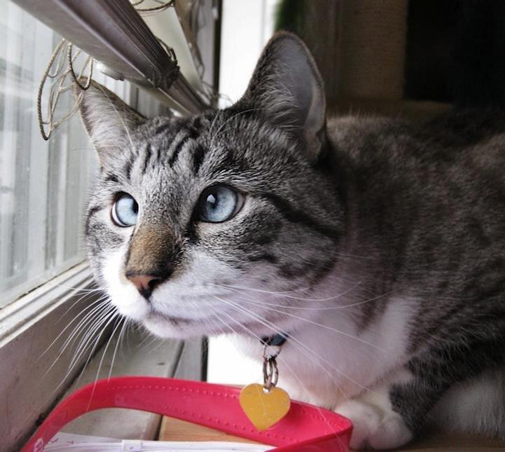 A história do pitbull Patrick e Spangles, o gato vesgo 02