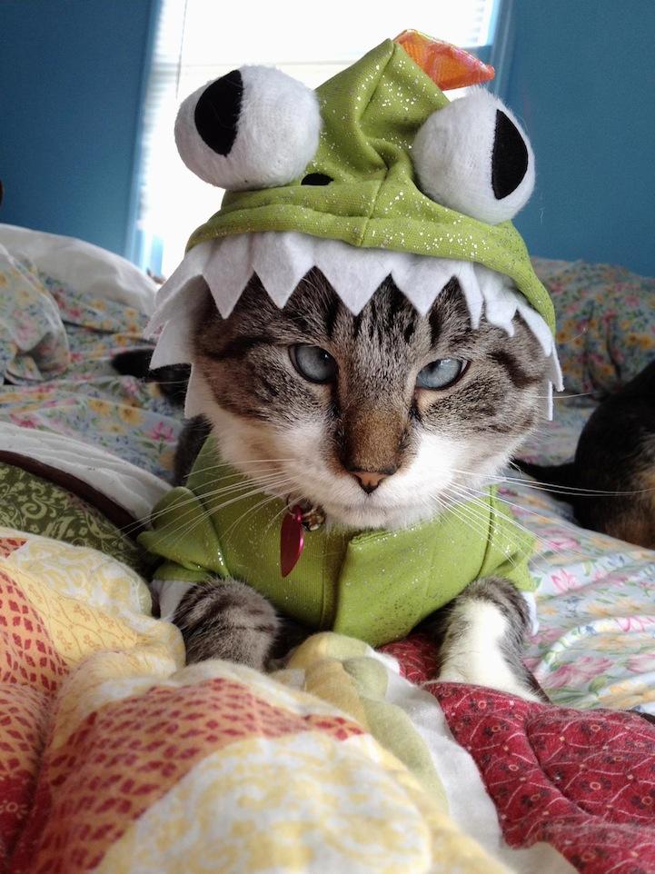A história do pitbull Patrick e Spangles, o gato vesgo 03