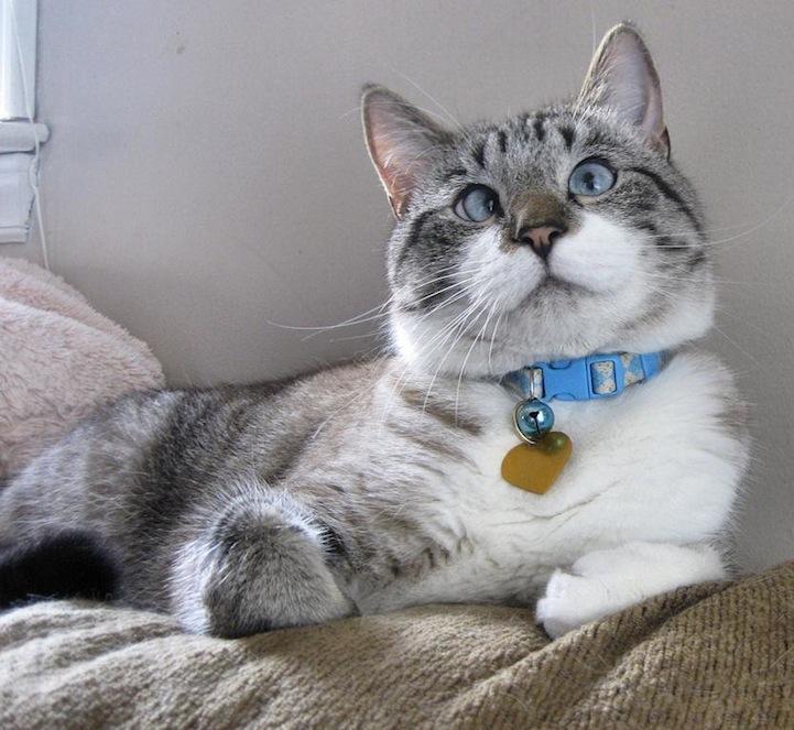 A história do pitbull Patrick e Spangles, o gato vesgo 04