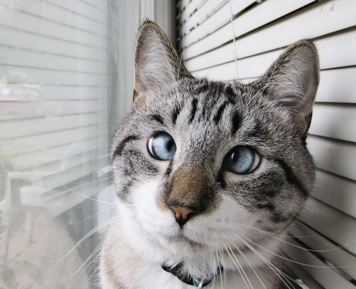 A história do pitbull Patrick e Spangles, o gato vesgo 05