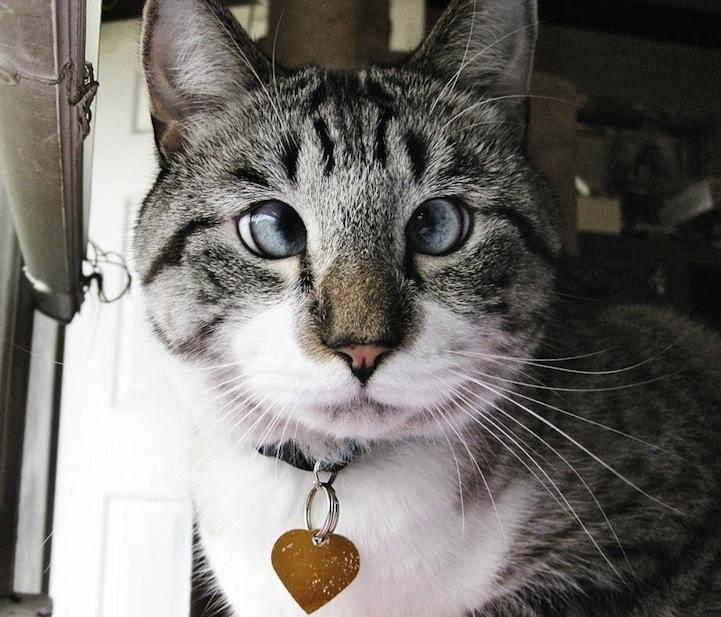 A história do pitbull Patrick e Spangles, o gato vesgo 06