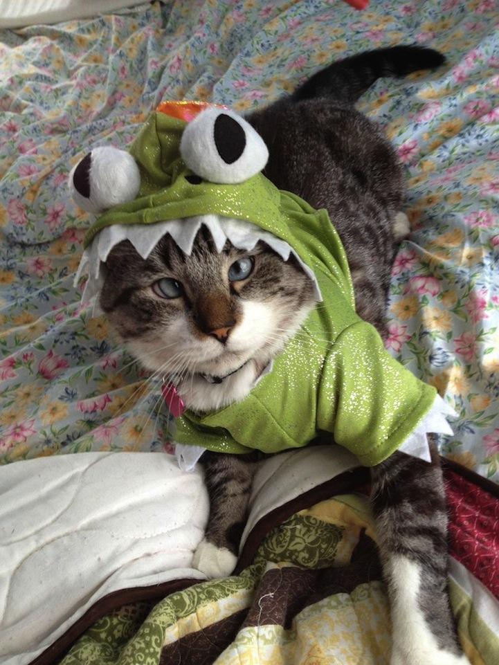 A história do pitbull Patrick e Spangles, o gato vesgo 07