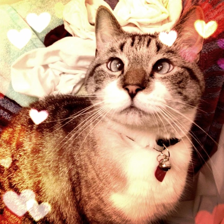 A história do pitbull Patrick e Spangles, o gato vesgo 08