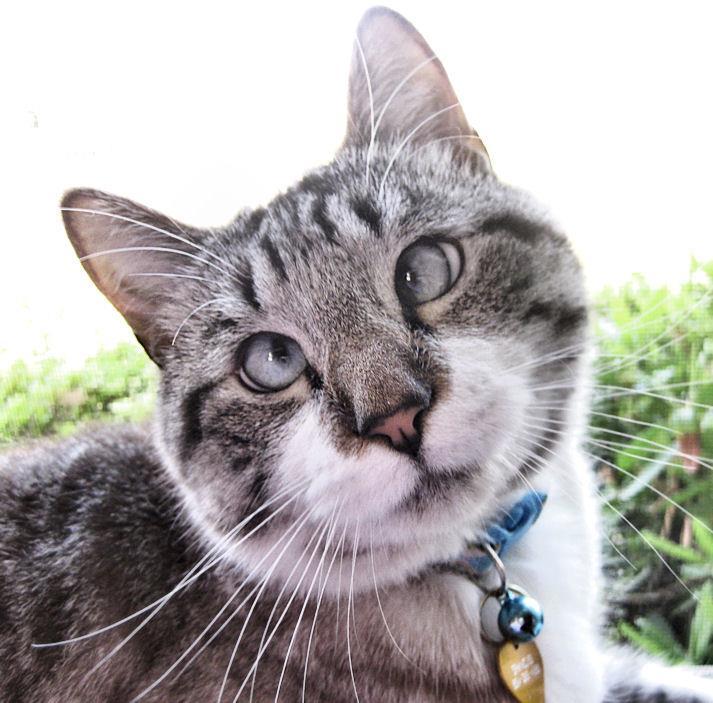 A história do pitbull Patrick e Spangles, o gato vesgo 09