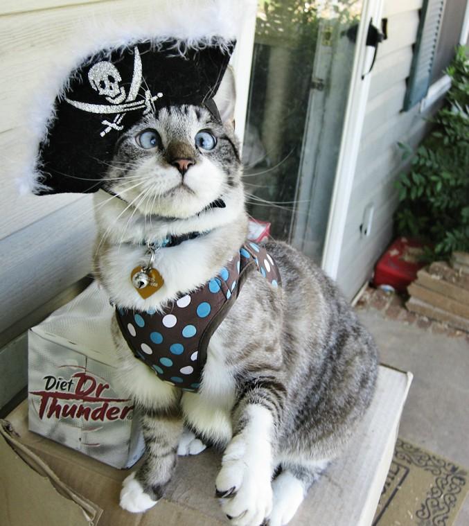 A história do pitbull Patrick e Spangles, o gato vesgo 10