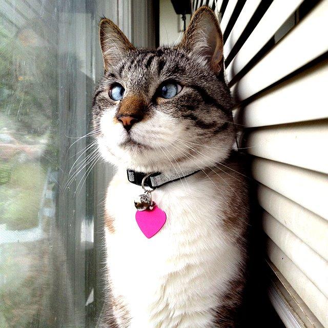 A história do pitbull Patrick e Spangles, o gato vesgo 12