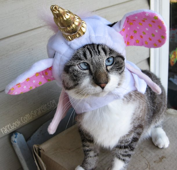 A história do pitbull Patrick e Spangles, o gato vesgo 13