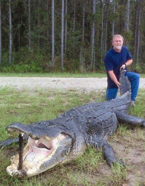 Caçadores arpoam super-crocodilo 01
