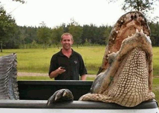 Caçadores arpoam super-crocodilo 05