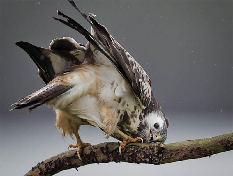 Timing perfeito - Fotos animais tiradas no momento exato 02