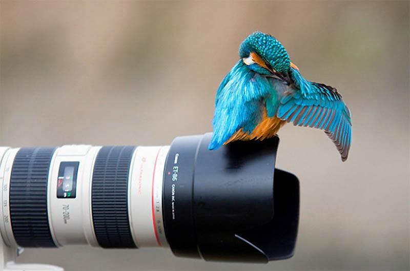 Timing perfeito - Fotos animais tiradas no momento exato 03