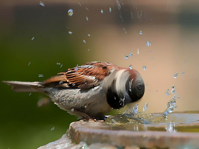 Timing perfeito - Fotos animais tiradas no momento exato 05