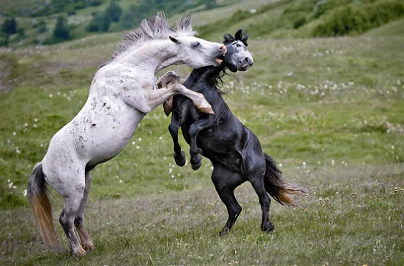 Timing perfeito - Fotos animais tiradas no momento exato 06