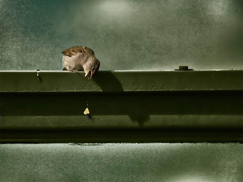 Timing perfeito - Fotos animais tiradas no momento exato 11