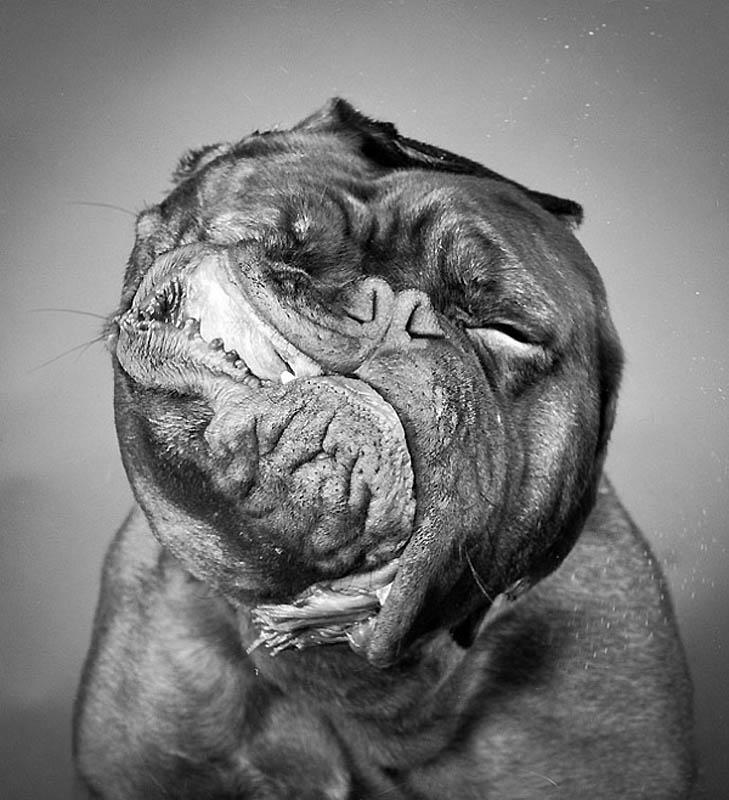 Timing perfeito - Fotos animais tiradas no momento exato 13