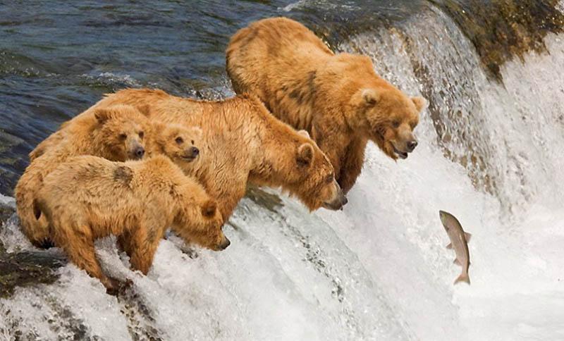 Timing perfeito - Fotos animais tiradas no momento exato 14