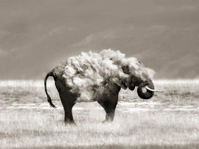 Timing perfeito - Fotos animais tiradas no momento exato 17