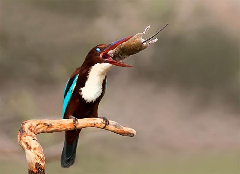 Timing perfeito - Fotos animais tiradas no momento exato 18