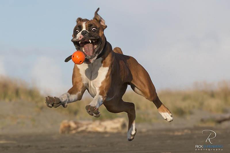 Timing perfeito - Fotos animais tiradas no momento exato 20