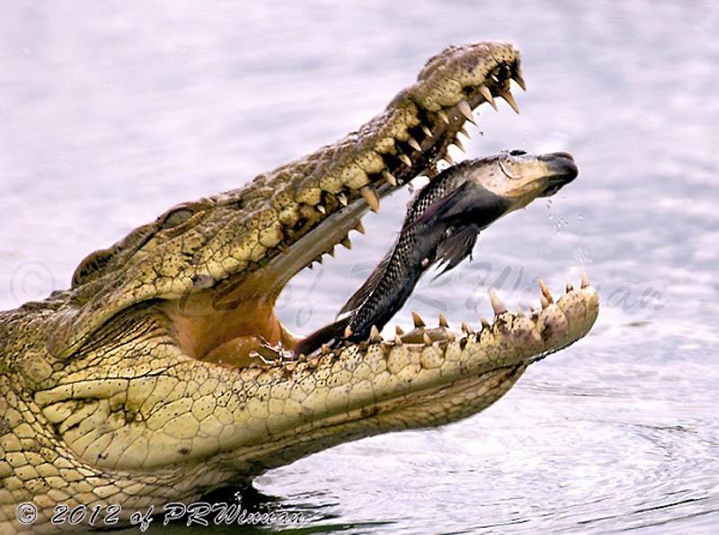 Timing perfeito - Fotos animais tiradas no momento exato 22