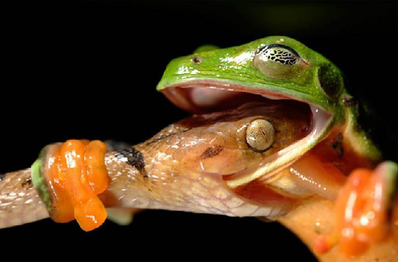 Timing perfeito - Fotos animais tiradas no momento exato 24