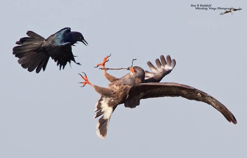 Timing perfeito - Fotos animais tiradas no momento exato 26